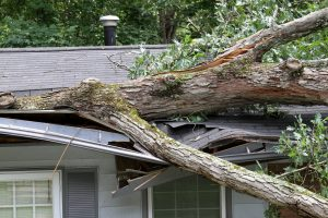 Options for Repairing a Damaged Home